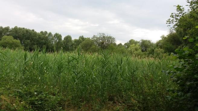 Sattgruene Sumpflandschaft