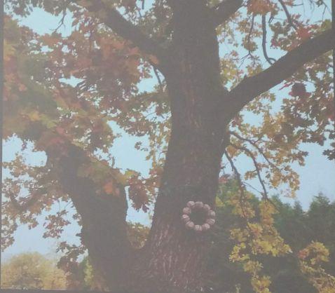 Baum mit Meisenknödel